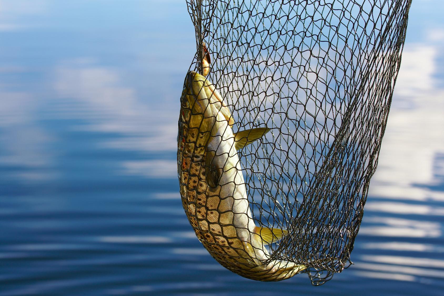 woher kommt der fisch bluhm systeme blog