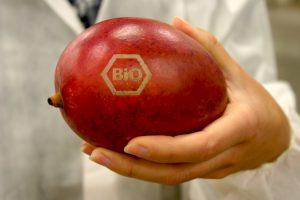 Statt Etiketten: Ein Laser bringt das Bio-Siegel direkt auf die Mangoschale auf.