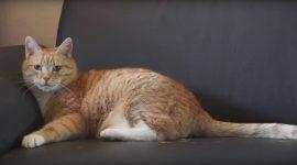 Katzenhaare entfernen mit Etiketten