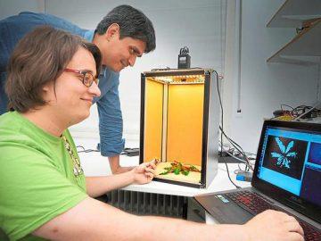 laser erkennt unkraut