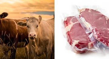 Fleischkennzeichnung Bluhm Systeme